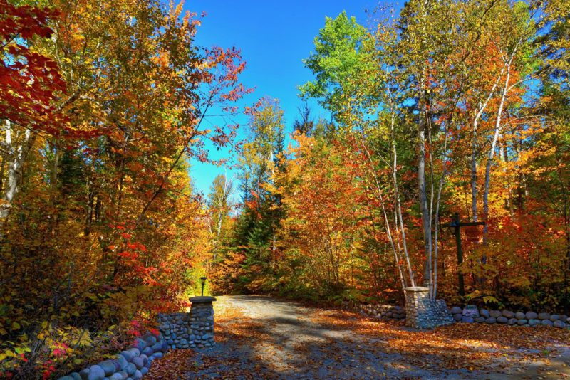 Fall scene; road tall trees orange and red leaves